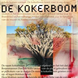 Grafische ontwerp - Kokerboom